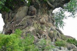 درختی که 325 نوع حیوان به تنه آن حک شده.... فــوق العاده زیـــــــــــبا!