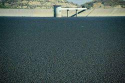 اینا توپهای سیاه رنگ هستند که ایالت کالیفرنیا ول کرده روی دریاچه ذخیره آب برای جلوگیری از تبخیر آب 96 میلیون توپ با هزینه 34میلیون دلار!!  اینا اشعه UV رو منعکس میکنن و سالانه جلو تبخیر 300 میلیون گالن آب رو میگیره. همچنین جلو رشد جلبک و تشکیل مواد سرطانزا رو میگیرن. طبق محاسباتشون در طول 25 سال باعث صرفه جویی 250 میلیون دلار خواهد شد ما هم صلوات میفرستیم تا ذخایر آبی ما خشک نشه.