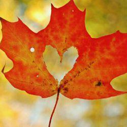 """صبح امروز کسی گفت به من : تو چقدر تنهایی...  گفتمش در پاسخ...  تو چقدر حساسی... تن من گر تنهاست...  دل من با دلهاست...  دوستانی دارم  بهتر از برگ درخت  که دعایم گویند و دعاشان گویم...  یادشان در دل من...  قلبشان منزل من... صافی آب مرا یاد تو انداخت... رفیق...  تو دلت سبز...  لبت سرخ...  چراغت روشن...  چرخ روزیت همیشه چرخان...  نفست داغ...  تنت گرم...  دعایت با من...  """"سهراب سپهری """""""