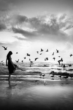 نه .. تو گم نشده ای ! پرندگان این دیار، گشنه بودند ، رد پایت را خوردند .. آن گاه گم شدگــی آغـاز شد ...  کجایــت جستجــو کنم ...!  | ساسان تبسمی |