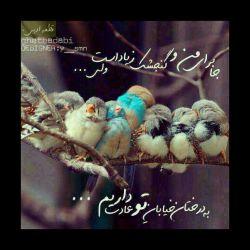 ارام تر سکوت کن عزیزتر از جانم صدای بی تفاوتی  هایت سوهان روحم  شده است