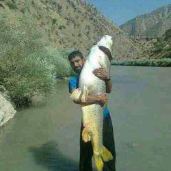 زرده ماهی دریاچه گهر و دوستم که آنرا آزاد کرد