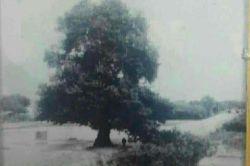 درخت رحمت،طاق بستان(طاق وسان) 60سال پیش