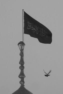 کبوتر حرم ، برنده نفر اول عکس مذهبی قم ،،، عکاس محمد