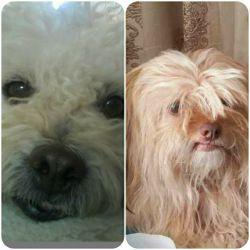 جیــــــــــمی و تدی...سگای خوشگلم