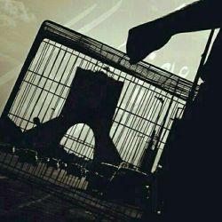آزادی فردی داشتن، یعنی حق این که در زندگی کدام قفس را برگزینیم.   برتراند راسل  نظرتون درمورد تصویر؟؟؟؟