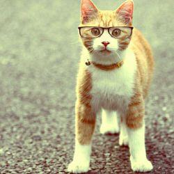 گربه عینک گزاشته!!!!مگه میشه؟؟؟مگه داریم؟؟؟
