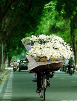 اگر میشد صدا را دید... چه گلهایی! چه گلهایی! که از باغ ِ صدای تو به هر آواز میشد چید. اگر میشد صدا را دید... #استآد_شفیعیـ_كدكنیـ