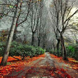 آرامش قدم زدن در راهی بی انتها .... جان دلم