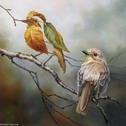 من از شش جهت خودم هستم؛  اما...  ازسمتی که صدایم می زنی،  پرنده ام...!!!    حسن آذری