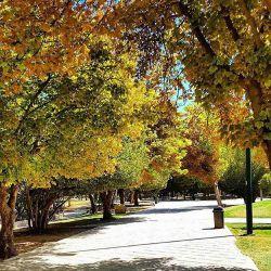 پارک آزادی شیراز #پاییز