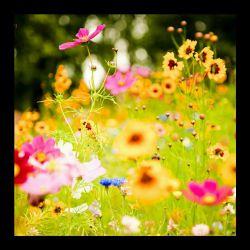 زندگی کن^_^ می گویند عمر بعضی پروانه ها فقط یک روز است. اما همان یک روز آن قدر بال بال می زنند و از نعمت زندگی لذت می برند که وقتی از دنیا می روند از زندگی خود ناراضی نیستند!  بسیاری از اوقات اگر ما بپذیریم که مثل همون پروانه برای چشم برهم زدنی فرصت زندگی یافته ایم خیلی از کارها و رفتارهایمان عاقلانه تر ومحبت آمیزتر و هیجاناتمان مهارتر و زندگیمان شیرین تر می شود.  زندگیتون پر از لحظه های پروانه ای!