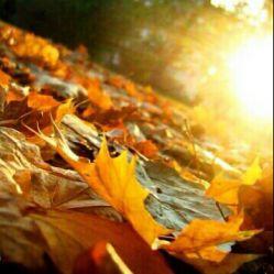 خدایا به حق عظمتت تو این فصل پاییز تکلیفم رو مشخص کن و کمکم کن برام دعا کنید مشکلم حال شه ♥