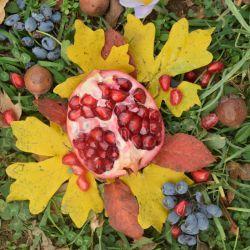 پاییز ..... انار .......رنگارنگ