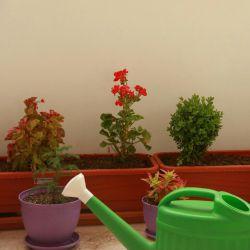 بالکن و گلدان و آبپاش ، سبزی در جریان ، آب در آسمان ، آسمان در آب ، جای ریحان و نعنا خالیست گرچه آسمان آبیست