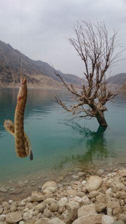 سد کارون 3 درحال ماهیگیری(مارماهی) (تور لیدر باقری 09133675760)