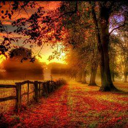 پاییز برگ ریزان