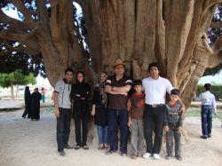 کهنسال ترین درخت سرو در آباده