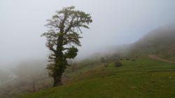 شاهرود اتفاعات جنگل اولنگ