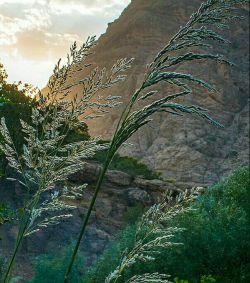دورود پایتخت طبیعت ایران