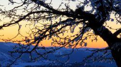 جنگل ابر . درخت یخ زده ودور نمایی از افراتخته زیبای علی اباد