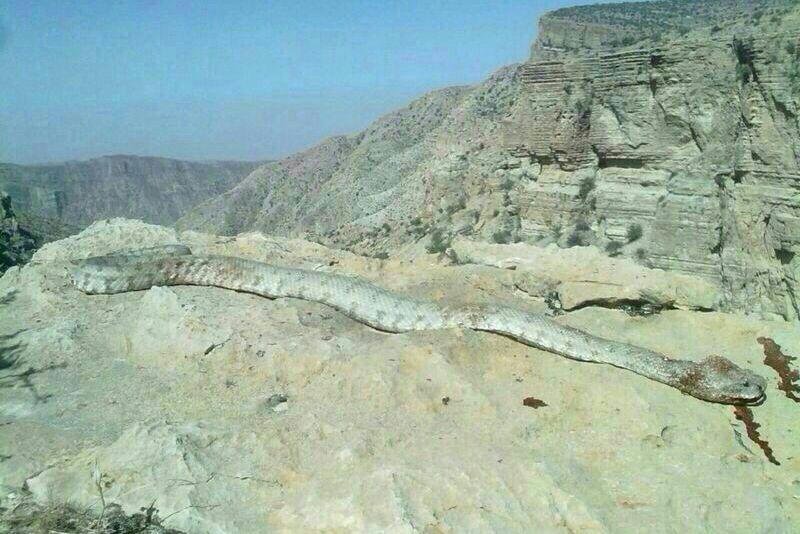 ماردراطراف شیراز