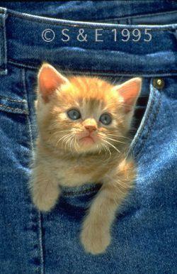 بچه گربه خیلی دوس دارم...
