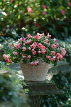 ســــــر میــــــرود ... گل از سبد ، عطر از گل ، باد از عطــر ، چنان که تصویر از آینه ... و زیبایی تو ؛ از چشـــــــم من ! { عمران صلاحی }