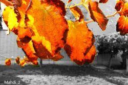 پاییز پادشاه فصل ها... امید که پاییز فصل ریزش باشه هم ریزش نعمت های الهی و هم فصل ریزش گناهان...  پاییز خوش بگذره...