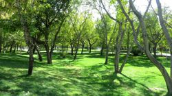 مشهد - پارک ملت