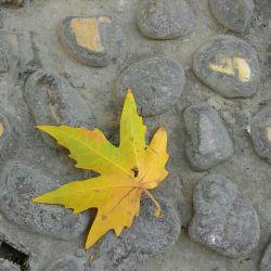 سنگ از اول هم حرف زدن بلد نبود,از خاطرات بستر رود هم چیزی یادش نبود,!میخ شده بود بر زمین..,فصلها میرفتند,پرنده ها مهاجرت میکردند اما سنگ...!برگ چنار با دست باد چرخ خورد ورقصان گونه ی سنگ را نوازش کرد,دل سنگ آب شد....