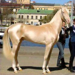 زیباترین اسب سال 2013جهان