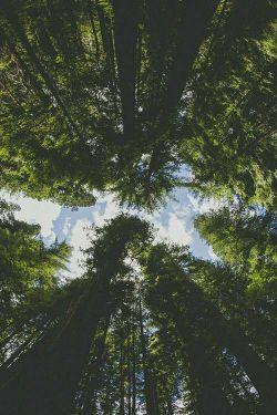 درخت را,دوست دارم ..چون فردا دری می شود ,که تو,بازش می کنی و قدم در رویاهایم می گذاری.  #محمدرضا_مهدیزاده