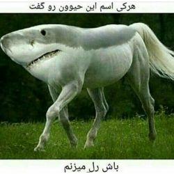 هر کی اسم این حیوون رو بگه باش رل میزنم!!!