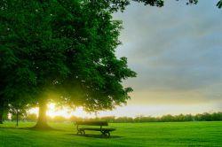 درخت پیش از آنكه دستانش روشنایی و نور را تجربه كند و ببیند ، پاهایش تاریكی را دیده و تجربه كرده ، پس برای رسیدن به روشنایی باید از تاریكی عبور كرد...