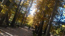 پاییز در باغ ایرانی