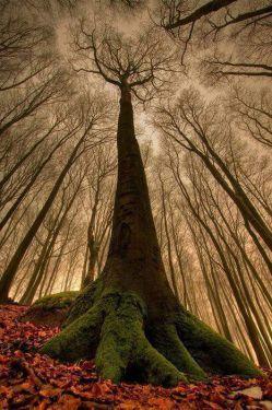 درخت از دید مورچه
