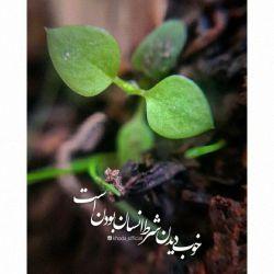 گر نداری دانش ترکیب رنگ...  بین گلها، زشت یا زیبا مکن...  خوب دیدن شرط انسان بودن است...  عیب را در این و آن، پیدا مکن...  #مولانا