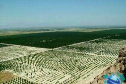 جیرفت-باغات کشت و صنعت