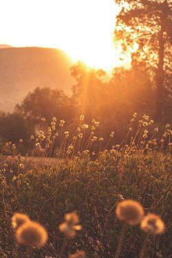 روسری وا میکنی خورشید عینک می زند! * دسته گل غش میکند پروانه پشتک می زند!  کفش در می آوری، قالی علامت می دهد * جامه از تن می کَنی آیینه چشمک می زند!