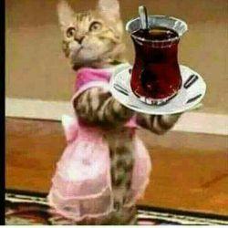 بفرمایید چایی... خسته شدید از بس که پست نگاه کردید :-)