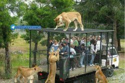 باغ وحش در هلند حیوانات رو تو قفس نمیزارن بلکه انسان ها رو داخل قفس میزارن برن حیوانات ببینن