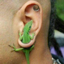 سلام گوشواره جدید خخخخ