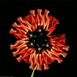 تصاویر گل رو اگه بزرگ کنید می بینید که همشون آدم هستند واین تصاویر قشنگ رو  تو امریکا ساختن☝☝☝☝