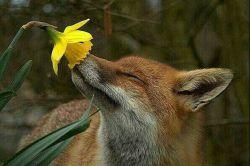 حمایت از حقوق حیوانات