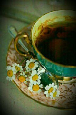 همیشه چای برایم بیشتر از یک نوشیدنی ساده بوده! چای بهانهایست برای هم صحبت شدن با کسی. چای میتواند دلیل پیش پا افتاده ای باشه برای تازه کردن یک دیدار که خیلی وقت است باید اتفاق میافتاده و به هر دلیلی نیافتاده... چای میتواند واحد اندازه گیریه رفاقت و صمیمیت باشد! دیدگاه اول
