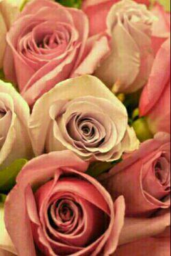 این گل هارو باعشق تقدیم میکنم به بهترین اجی دنیا ،عزیز ترین و مهربونم  @zahra4444s