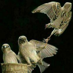 پرنده ای که می خواهد کوچ کند بگذار برود٫٫هوای _#سرد بهانه است هوای دیگری در سر دارد؛