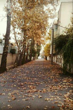 پاییز هیچ حرف تازهای برای گفتن ندارد با اینهمه از منبر بلند باد بالا که میرود درختها چه زود به گریه میافتند !