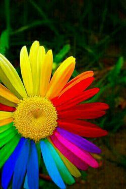 گل عشقم.خیلیییییییی دوسش دارم :-*